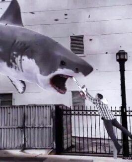 Filmowe rekiny atakują!