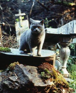 """""""Smętarz dla zwierzaków"""": tajemnice kultowego horroru"""